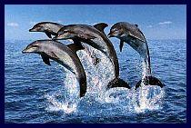 Delfini guardiani