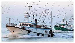 pescherecci in azione