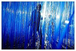 Soto Penetrable Blue